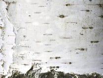 Corteza de abedul con textura natural del abedul Imagen de archivo