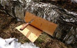 Corteza de abedul del corte de un árbol de abedul Fotos de archivo libres de regalías