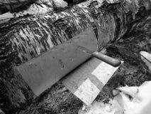 Corteza de abedul del corte de un árbol de abedul Foto de archivo libre de regalías