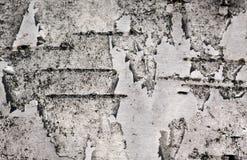 Corteza de abedul del fondo Imagenes de archivo