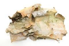Corteza de abedul en blanco Fotos de archivo