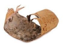 Corteza de abedul en blanco Imagen de archivo libre de regalías