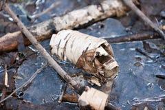 Corteza de abedul en el charco congelado de abril del bosque Fotografía de archivo libre de regalías