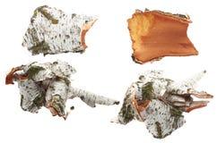 Corteza de abedul en fondo aislado blanco Imágenes de archivo libres de regalías