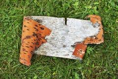 Corteza de abedul en hierba Foto de archivo libre de regalías