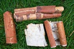 Corteza de abedul en la hierba Foto de archivo libre de regalías