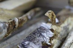 Corteza de abedul en la leña del abedul Imágenes de archivo libres de regalías