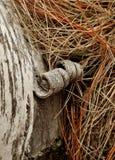 Corteza de abedul encrespada Imagen de archivo libre de regalías