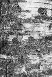 Corteza de abedul Fondo abstracto colorido Imagenes de archivo