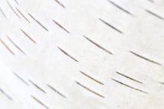 Corteza de abedul, fondo natural Foto de archivo