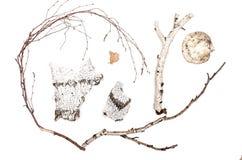Corteza de abedul, ramita de la rama, hoja y hongo de estante Imagen de archivo