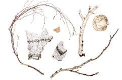 Corteza de abedul, ramita de la rama, hoja y hongo de estante Fotos de archivo