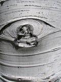 Corteza de Aspen con la cicatriz de la ramificación Imagen de archivo libre de regalías