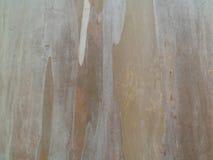 Corteza de bambú fotos de archivo libres de regalías