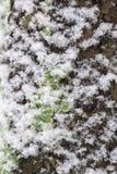Corteza de la cubierta de nieve del árbol Fotos de archivo