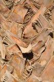 Corteza de la palma foto de archivo libre de regalías