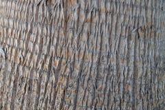 Corteza de la palma Imagen de archivo