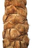 Corteza de la palma aislada Imagen de archivo