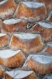 Corteza de la palmera Imagenes de archivo