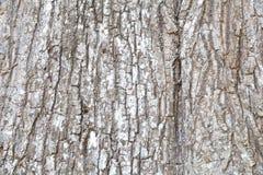 Corteza de la textura del árbol foto de archivo