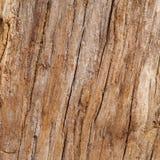 Corteza de la textura del árbol imágenes de archivo libres de regalías
