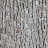 Corteza de la textura del árbol fotos de archivo