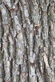 Corteza de la textura del árbol fotografía de archivo libre de regalías