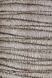 Corteza de la textura del árbol de pino Imagen de archivo libre de regalías
