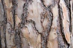 Corteza de la textura del árbol de pino fotografía de archivo libre de regalías