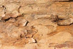 Corteza de la textura del pino Fotos de archivo libres de regalías