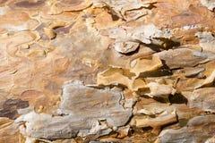 Corteza de la textura del pino Foto de archivo