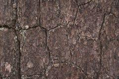 Corteza de la textura del pino Imagen de archivo