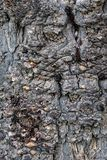 Corteza de los detalles de un árbol fotos de archivo