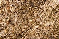 Corteza de madera Fotos de archivo