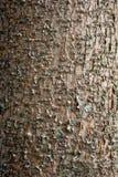 Corteza de madera Fotografía de archivo