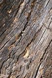 Corteza de madera abstracta de la textura Imagen de archivo libre de regalías