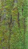 Corteza de madera con el musgo Fotos de archivo