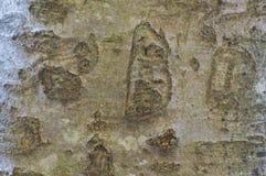Corteza de madera de la textura Fotos de archivo libres de regalías