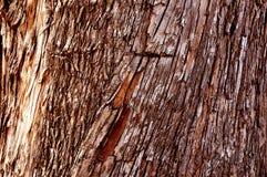 Corteza de madera de la textura Imagen de archivo