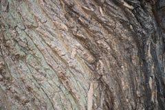 Corteza de madera de la textura Foto de archivo