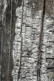 Corteza de madera quemada Imagen de archivo