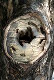 Corteza de madera vieja Imágenes de archivo libres de regalías