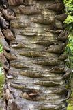 Corteza de palmera imagen de archivo