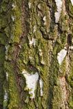 Corteza de árbol con el musgo Foto de archivo libre de regalías