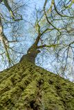 Corteza de árbol cubierta con el musgo verde fotos de archivo
