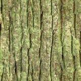 Corteza de árbol inconsútil, textura de la corteza Foto de archivo libre de regalías