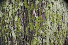 Corteza de un árbol Imágenes de archivo libres de regalías