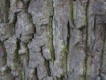 Corteza de un árbol fotografía de archivo libre de regalías