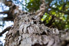 Corteza de un árbol Foto de archivo libre de regalías