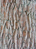 Corteza de un árbol fotografía de archivo
